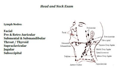 head & neck exam